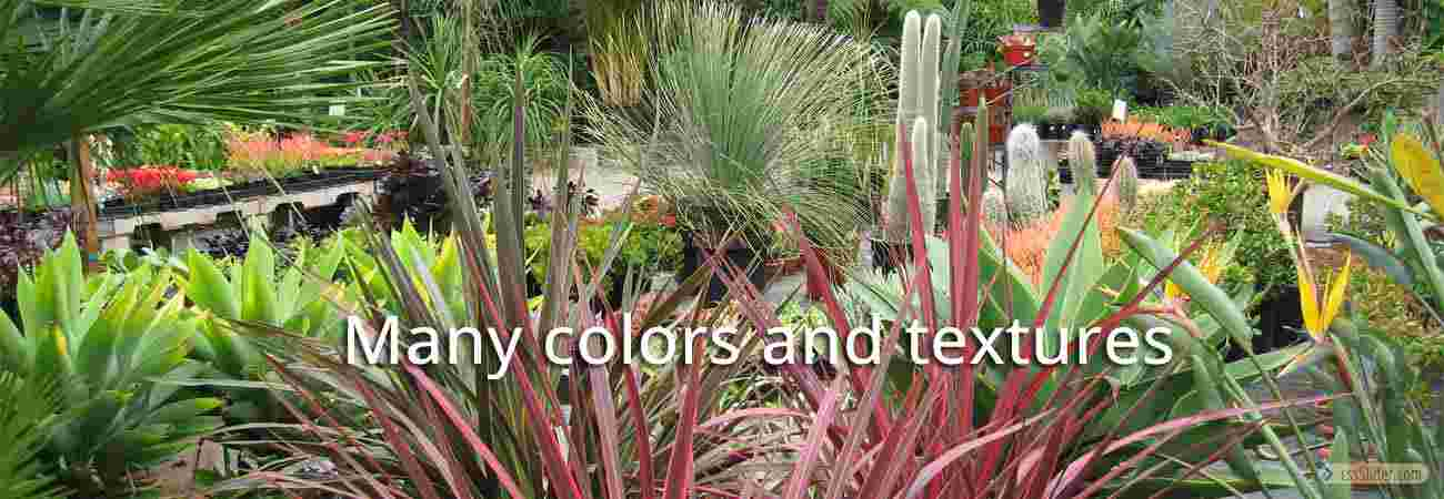 Plants-of-Many-Colors