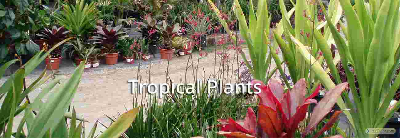 TropicalPlants