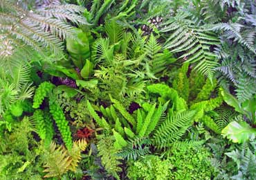 fern plants ferns