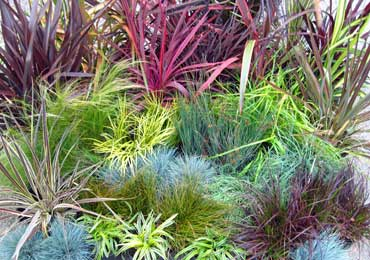 grasses and grass-like plants